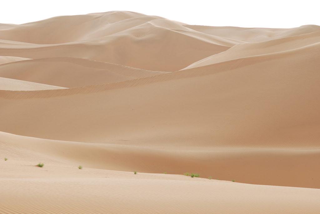 砂漠にちょろっと顔を出す、緑のサジー