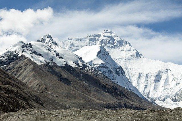 チベット高山の数少ない薬効のある植物、サジー