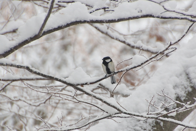 凍える冬の山で、サジーは鳥に運ばれるのを待っている